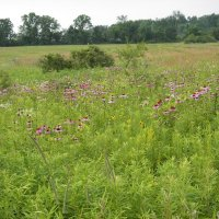 Our Wildflower Meadow in Summer